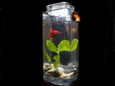 Noclean aquarium glass fish tanks for How to clean a betta fish tank