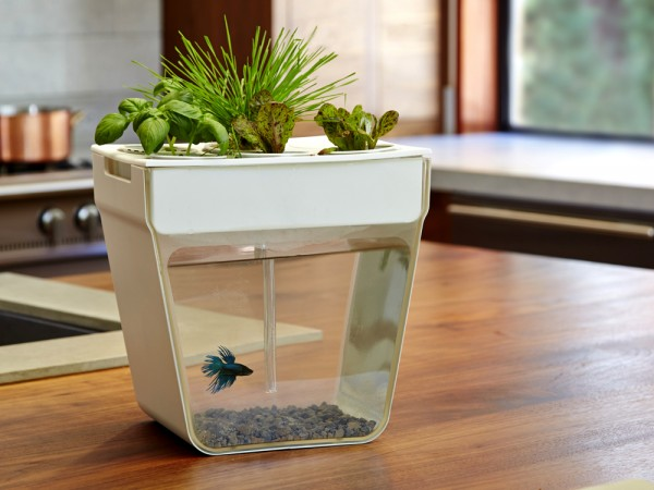 Home aquaponic from back to the roots aquafarm - Back to the roots water garden review ...