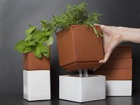 Cult Design: Evergreen Herb Pot Large