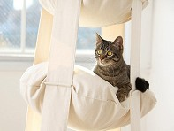 The Cat's Trapeze