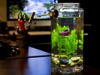 NoClean Aquariums: Self-Clean Aquarium