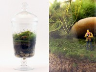 Twig: Ready-made Terrarium - Picture That!