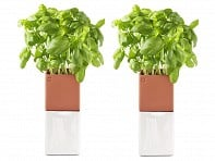 Cult Design: Evergreen Herb Pot Small Pair