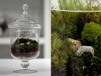 Twig: Ready-made Terrarium - Grazed & Confused