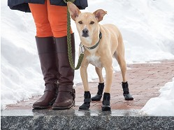 Hound & Tail - Winter Dog Boots