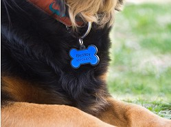 SiliDog - Silent Pet Tag