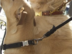 Bold Lead Designs - Leather Dog Accessories