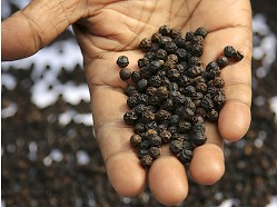 The Reluctant Trading Experiment - Tellicherry Peppercorns & Icelandic Sea Salt