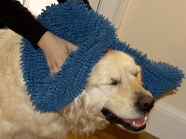 Soggy Doggy - Doormat & Towels