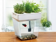 Water Garden: Home Aquaponics Kit - Case of 4
