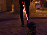 LED Lite Up Leash Mixed Case - Case of 12