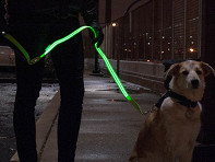 4id: LED Lite Up Leash - Case of 12