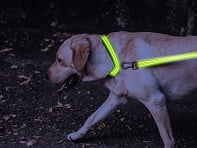 4id: LED Lite Up Collar Mixed Case - Case of 12