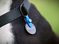 FreezeTag Pet Tag Silencer