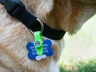 Playday Labs: FreezeTag Pet Tag Silencer - Sample