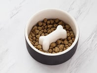 Slow Feed Dog Bowl - Medium - Black - Case of 6
