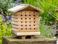 Wildlife World: Solitary Bee Hive - Case of 6