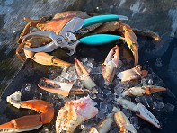 Crab Cutter - Case of 6