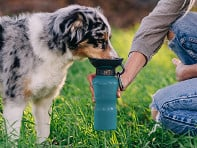 Highwave: AutoDogMug® Dog Bowl Water Bottle - Case of 12