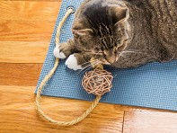 Feline Yogi: Catnip Yoga Mat - Starter Kit - Case of 18