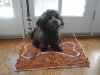 Soggy Doggy: Small Doormat - Case of 6