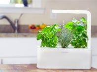 Click & Grow: Smart Herb Garden Starter Kit - Case of 5