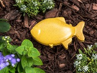 Goldfish Pod - Case of 6