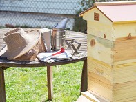 Honey Bee City: Starter Beekeeping Kit with Accessories