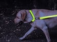 LED Lite Up Collar - Case of 12