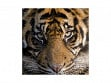 Children's Wooden Jigsaw Puzzle - Amur Tiger