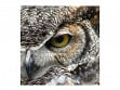 Large Wooden Jigsaw Puzzle - Great Horned Owl