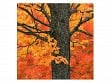 Wooden Jigsaw Puzzle - Small - New England Maple Tree