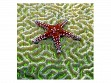 Wooden Jigsaw Puzzle - Small - Starfish on Brain Coral