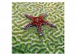 Large Wooden Jigsaw Puzzle - Starfish on Brain Coral