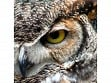 Teaser Wooden Jigsaw Puzzle - Great Horned Owl