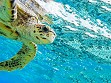 Teaser Wooden Jigsaw Puzzle - Sea Turtle 2