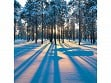 Teaser Wooden Jigsaw Puzzle - Sunrise in a Winter Forest