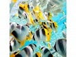 Teaser Wooden Jigsaw Puzzle - Butterfly Fish