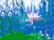 Teaser Wooden Jigsaw Puzzle - Waterlily