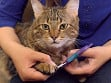 Safety Pet Nail Clipper