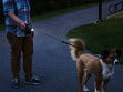 Follow Me Light Leash - Large - Black