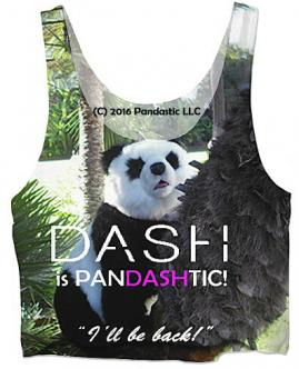 DASH IS PANDASTIC