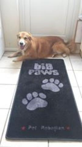Stop Muddy Paws - Big Paws