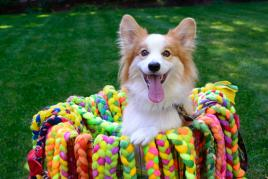 Knots of Fun- Makers of Happy Hands Happy Dog Toys