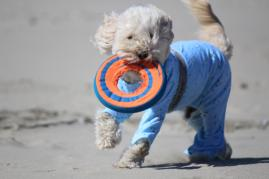Mozzie Pants and T-Shirts for dogs - Home harmony is our mission.