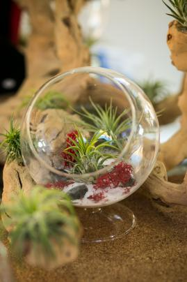 Unrooted Air Plant Terrariums